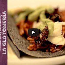 Tacos de fideo seco con chorizo y chapulines