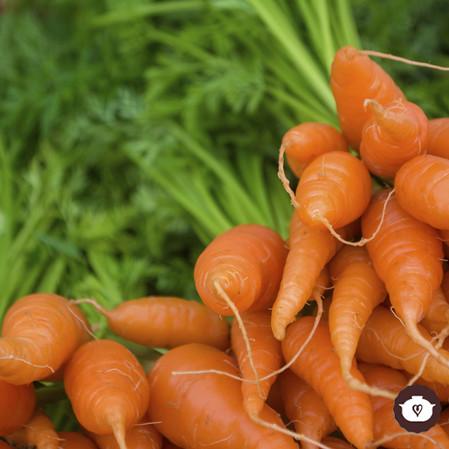 Beneficios de la zanahoria y recetas
