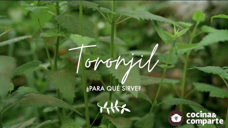 Toronjil morado ¿para qué sirve - Propiedades medicinales